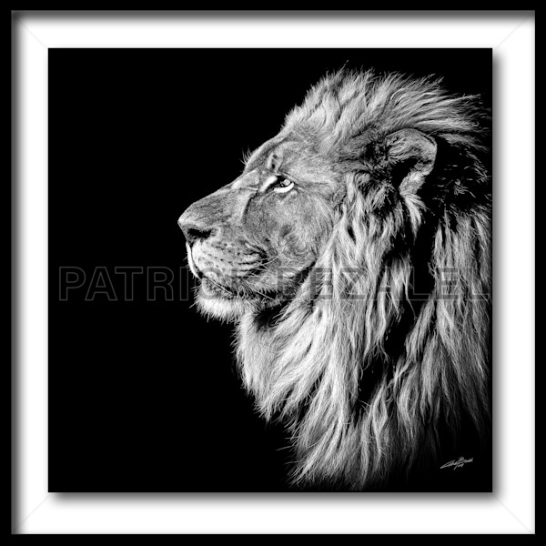 King Of Kings (Fine Art Print With Frame) - Prices in US$