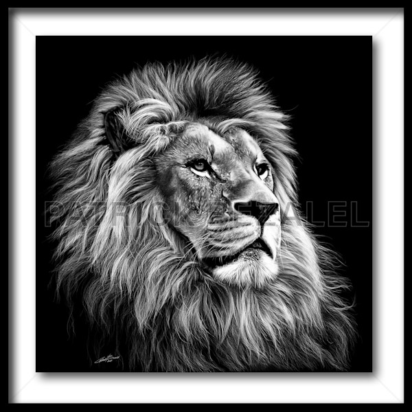 Majesty (Fine Art Print With Frame) - Prices in US$