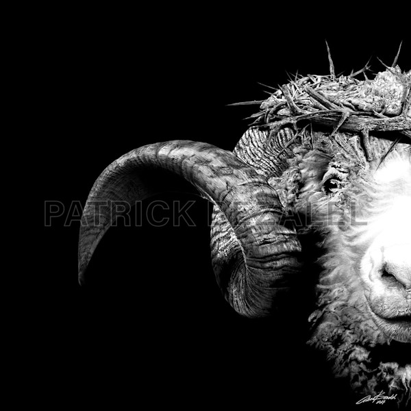 Own Limited Edition Hand-drawn Art Crown of Thorns-Ram | Patrick Bezalel Fine Artist