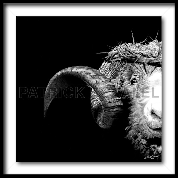Crown Of Thorns - Ram (Fine Art Print With Frame) - Prices in US$