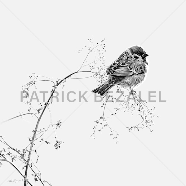Birds Do Not Worry About Tomorrow - Light Grey (DIASEC™ Print) - Prices in US$
