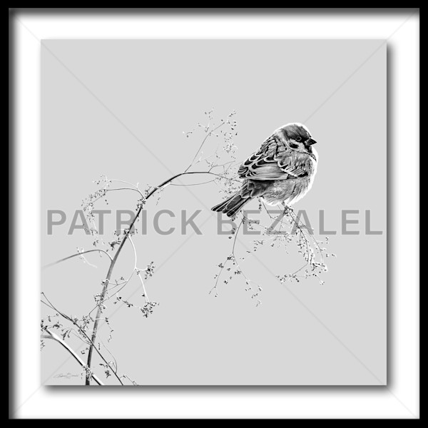 Birds Do Not Worry About Tomorrow - Dark Grey (Fine Art Print With Frame) - Prices in US$