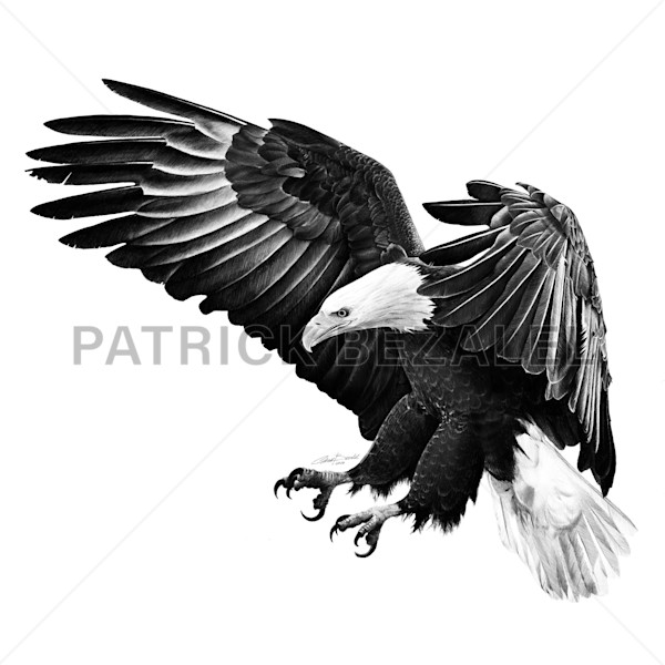 Under The Shadow Of His Wings (Diasec™ Print)   Prices In Us$ Art | Patrick Bezalel Pte Ltd