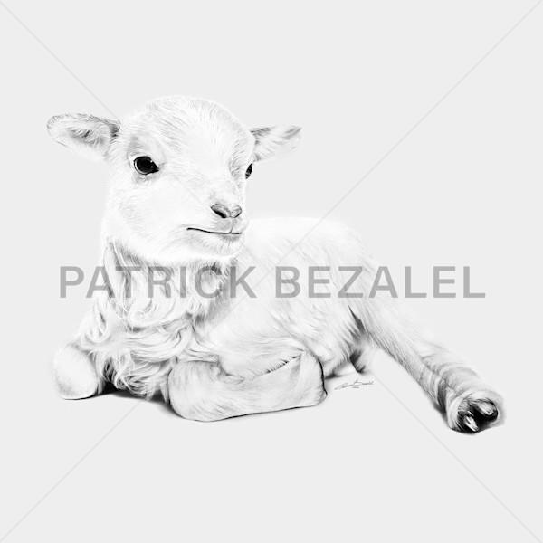 Lamb At Rest - Light Grey (MetalPrint) - Prices in US$