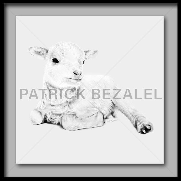 Lamb At Rest - Light Grey (Fine Art Print With Frame) - Prices in US$