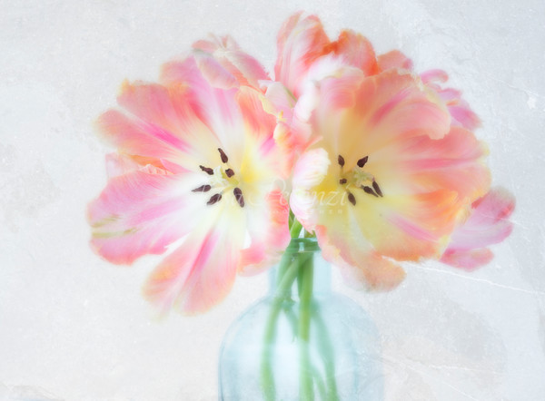 Parrot Tulips With Texture Photography Art | lisa pelonzi photographer