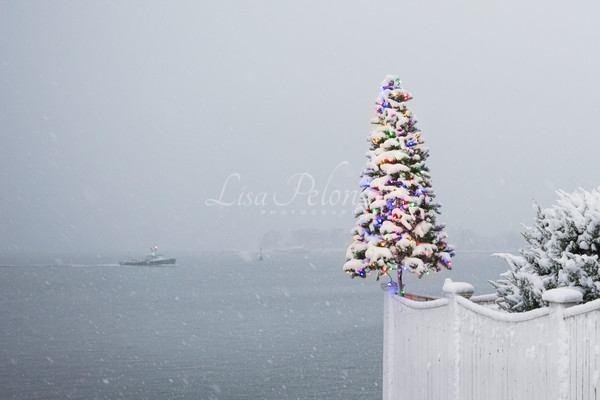 Oh Christmas Tree  Photography Art | lisa pelonzi photographer