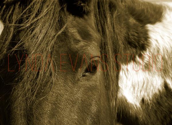 Equus Iv Art   Lynda Evans Studio