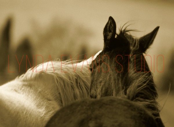 Equus Ii Art   Lynda Evans Studio