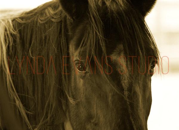 Equus Vii Art   Lynda Evans Studio