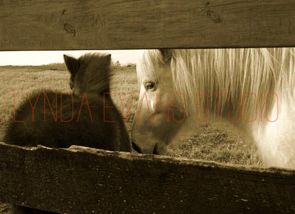 Equus I Art   Lynda Evans Studio