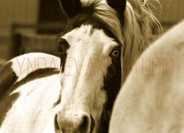 Equus V Art   Lynda Evans Studio