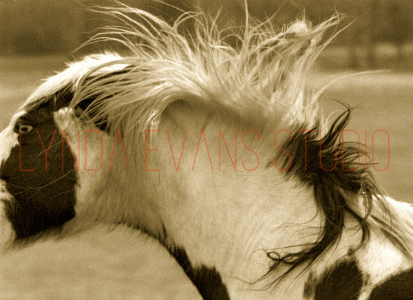 Equus Vi Art   Lynda Evans Studio