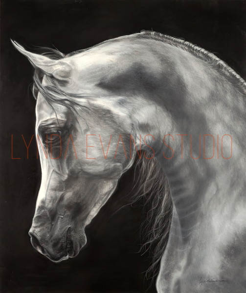 Regal Bow Art | Lynda Evans Studio