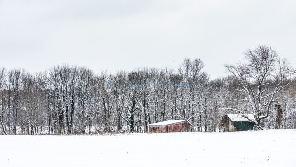 Country Comfort. Photograph by M F Gladu. Kent County MD