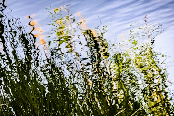 Cattails II. Fine Art Photography by M. F. Gladu. Kent County, MD