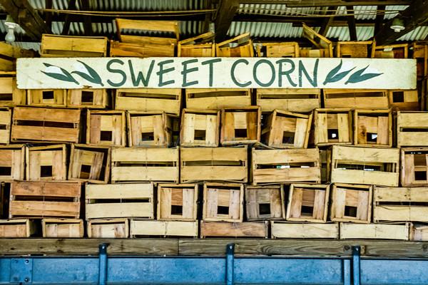 """Sweet Corn"". Fine Art Photograph by M F Gladu. Kent County MD"