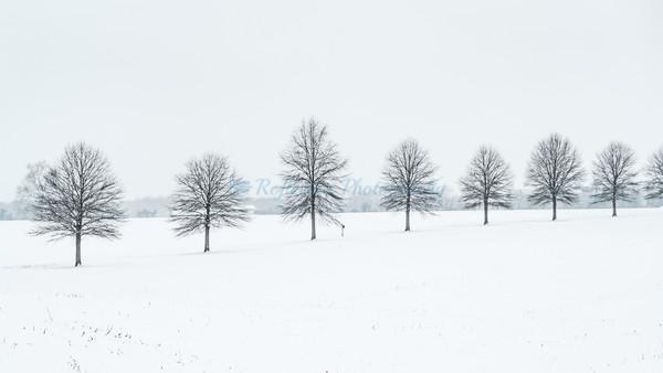Tree Line II. Fine Art Photograph by M F Gladu. Kent County MD