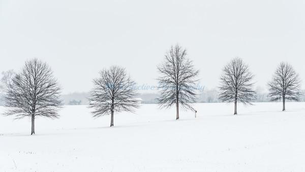 Tree Line III. Fine Art Photograph by M F Gladu. Kent County MD
