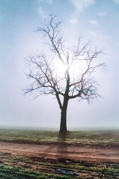 New Day. Fine Art Photograph of Tree in Fog by M F Gladu. Queen Annes County, MD