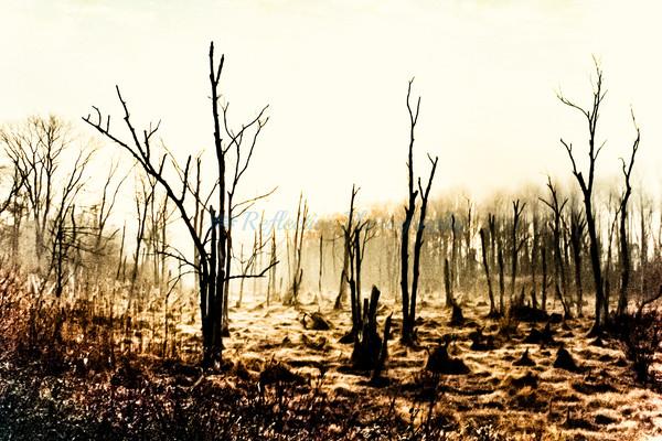 Change. Fine Art Photograph by M F Gladu. Kent County MD
