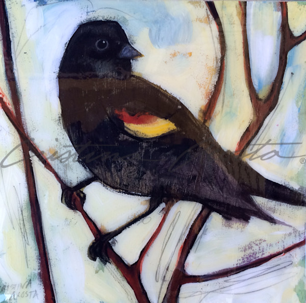 Redwing Blackbird On A Branch Art | Cristina Acosta Art & Design llc