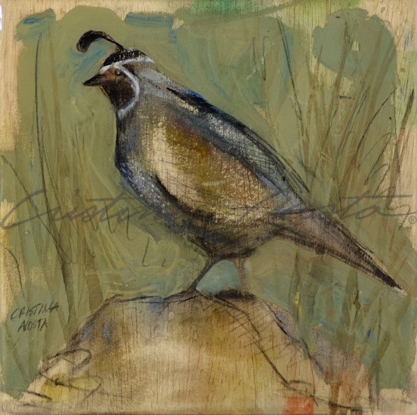 Sentinel male quail standing on rock