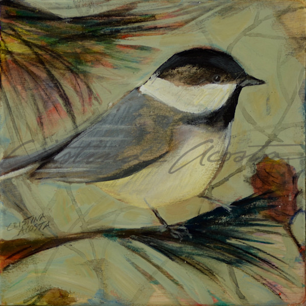 Chickadee standing on pine branch