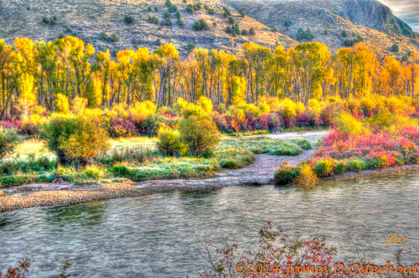 fall colors ,cotton wood trees,south fork snake river