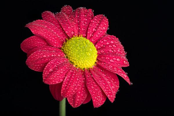 Spritzed Flower