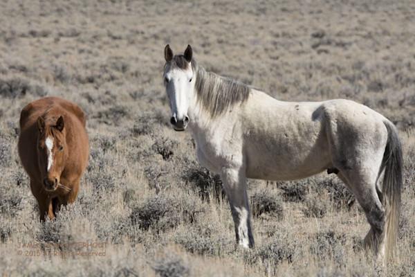 Wild Mustangs Horses Gallery
