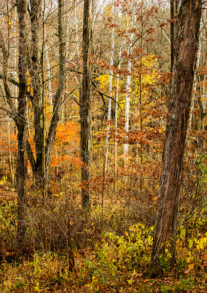 Tom Duffy Photography : gallery406