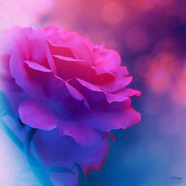 Misty Rose Blue