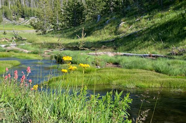small-creek-nwwsrq