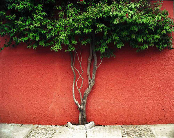 Red Wall and Tree