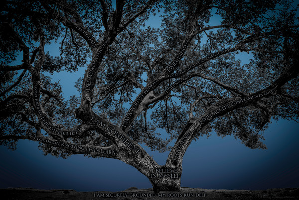 Believe Tree - Blue Photograph For Sale as Fine Art