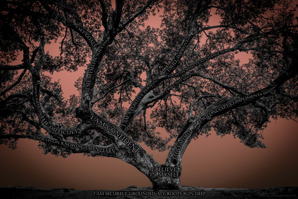 Believe Tree - Papaya Photograph For Sale as Fine Art