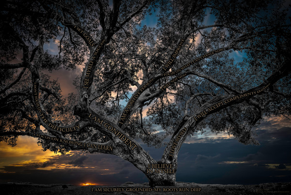 Believe Tree - Angel Feathers Sunset Photograph For Sale as Fine Art