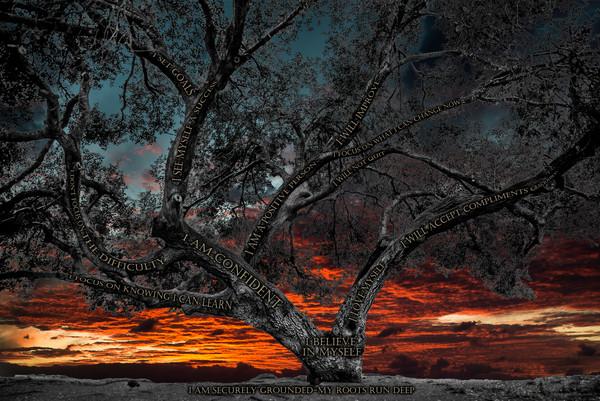 Believe Tree - La Jolla Sunset Photograph For Sale as Fine Art