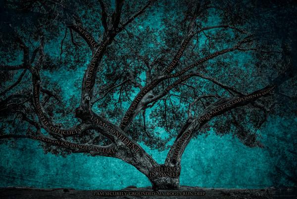 Original Believe Tree Photographs For Sale as Fine Art