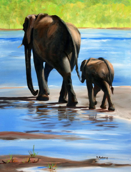 Safari Images | Prints & Canvases | Madaras Gallery