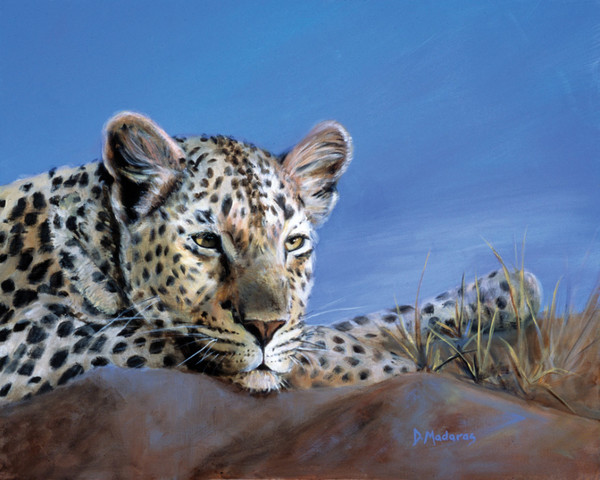 Safari Art Prints & Paintings by Diana Madaras | Madaras Gallery