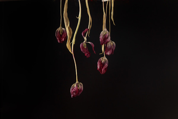 Faithfully Yours Photograph of Withered Buds | Susan Michal Fine Art