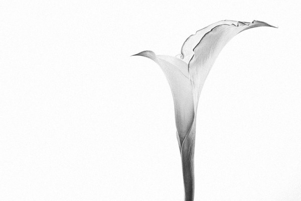 Defiant Photograph of a Flower in Bloom | Susan Michal Fine Art