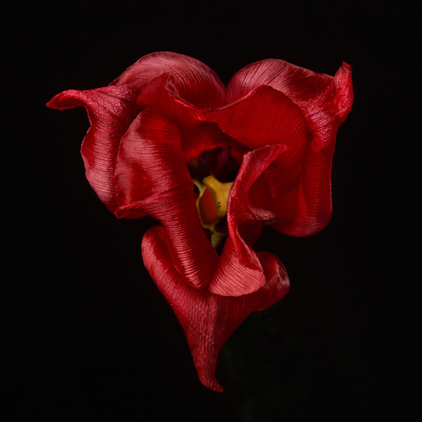 Browse and Shop Floral Images | Susan Michal Fine Art