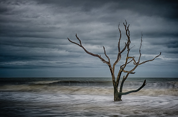 Tree on  Botany Bay Fine Art Photograph | JustBob Images