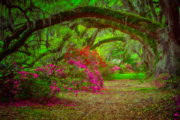 Magnolia Gardens Fine Art Photograph | JustBob Images