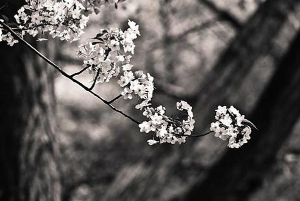 Delicate Flowers II