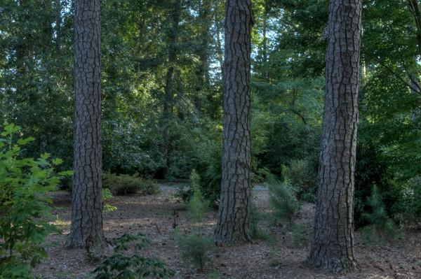 Fine Art Photographs of Tree Trunks in Norfolk by Michael Pucciarelli