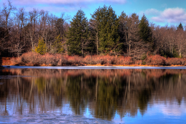 A Fine Art Photograph of Ricketts Glen Reflection by Michael Pucciarelli